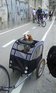 bicicleta, bike, bike tour, lungotevere, natureza, Panphili, Parco Pamphilj, passeio de bicicleta em Roma, roma, sant'angelo, testaccio, Tevere, Vila Pamphilj, Roma, itália,