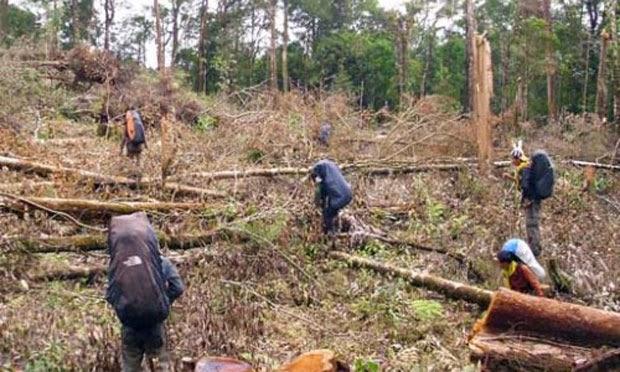 Butuh Dana 15,8 T Rehabilitasi 934 Ribu Hektar Hutan Rusak di Jambi