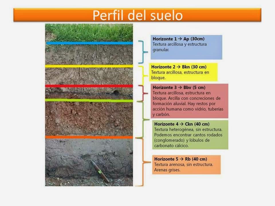 Suelo for Formacion de los suelos