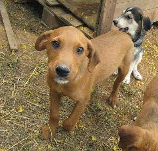 Los 3 meses de vida de un Cachorro