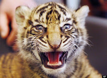 Tigar Baby