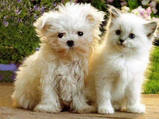 Twin Puppy and Kitten pictures