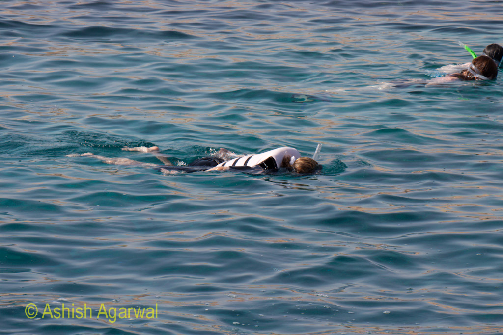 Just heads visible above water while doing snorkeling in the Ras Muhammed marine park in the Red Sea