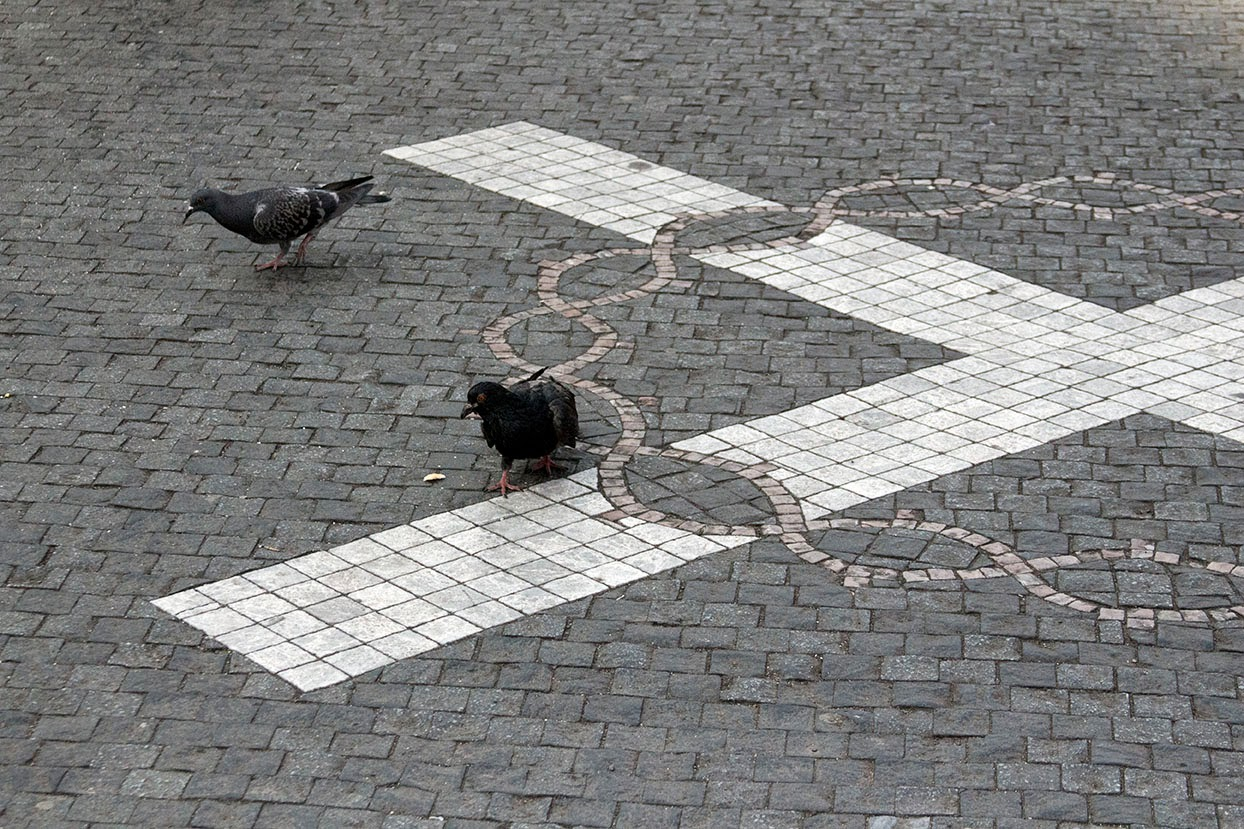 pigeons on sidewalk Prague