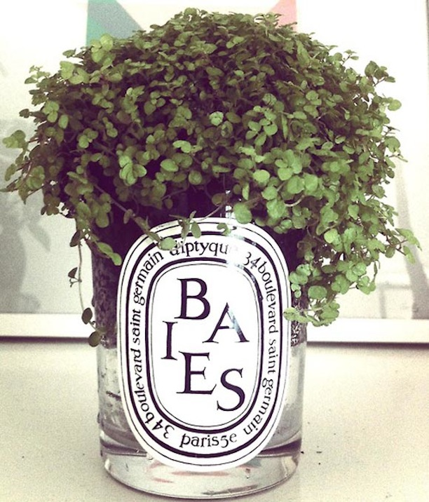 Diptyque Baies Candle Jar Greenery Vase Home Decor