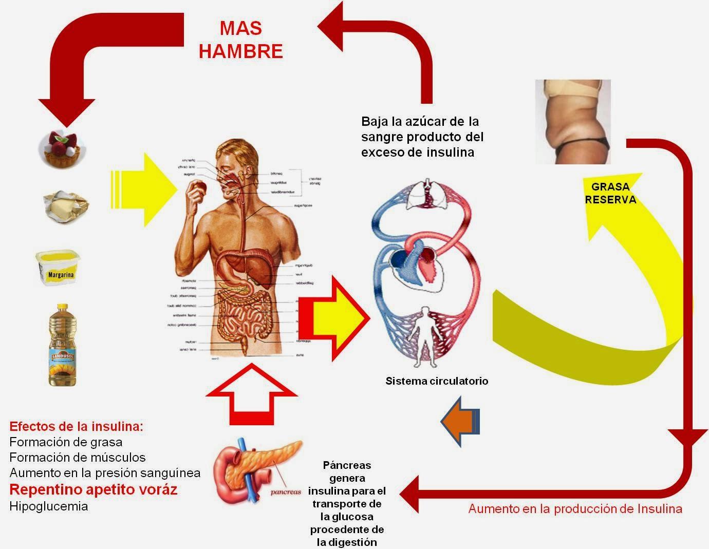 Resultado de imagen de Cambios metabólicos y de la glucosa