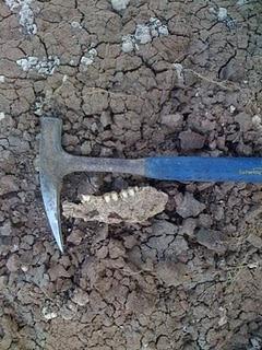 Paleontología - Oso Andino