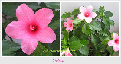 createwittyunleashed.blogspot.com : Hibiscus