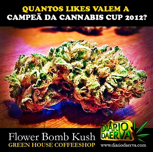 Quantos likes valem a campeã da #hightimes #cannabiscup #stoned #highsociety #w420 #medicinalmarijuana #medicated #fourtwenty #dope #kush #flower #love #legalize