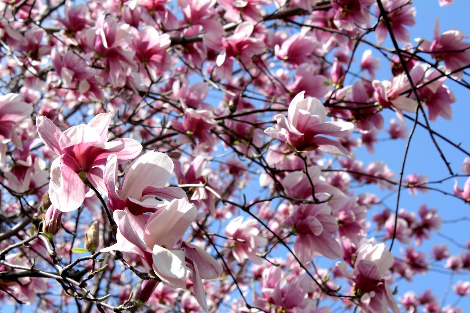 Sas Amp Sabs Kc In Bloom