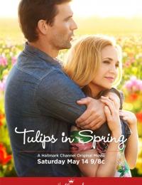 tulips in spring | Bmovies