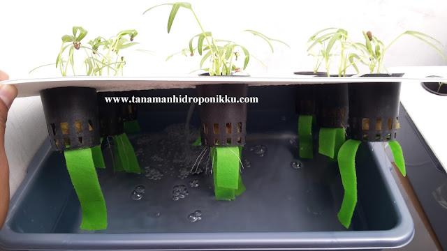 tanamanhiroponikku