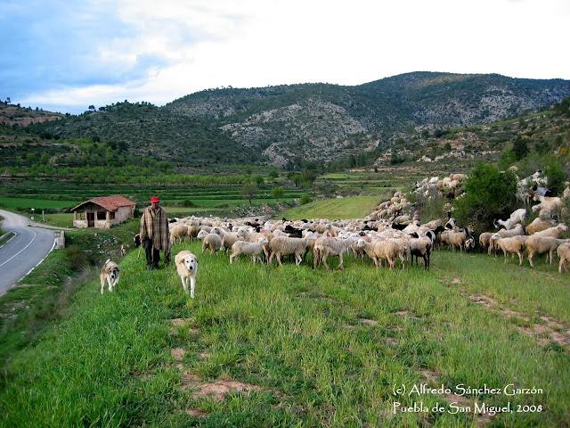 pastor-ganado-puebla-san-miguel