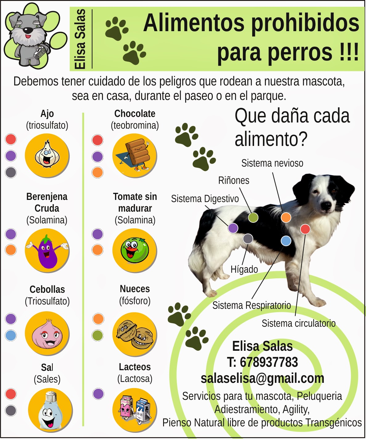 Locos por los animales alimentos prohibidos para perros - Alimentos recomendados para perros ...