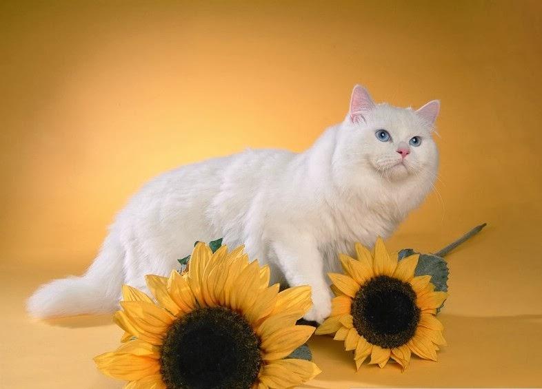 Hewan Hewan Lucu Kumpulan Kucing Kucing Imut Dan Lucu
