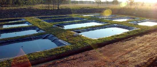 Piscicultura la piscicultura for Peces para criar en estanques