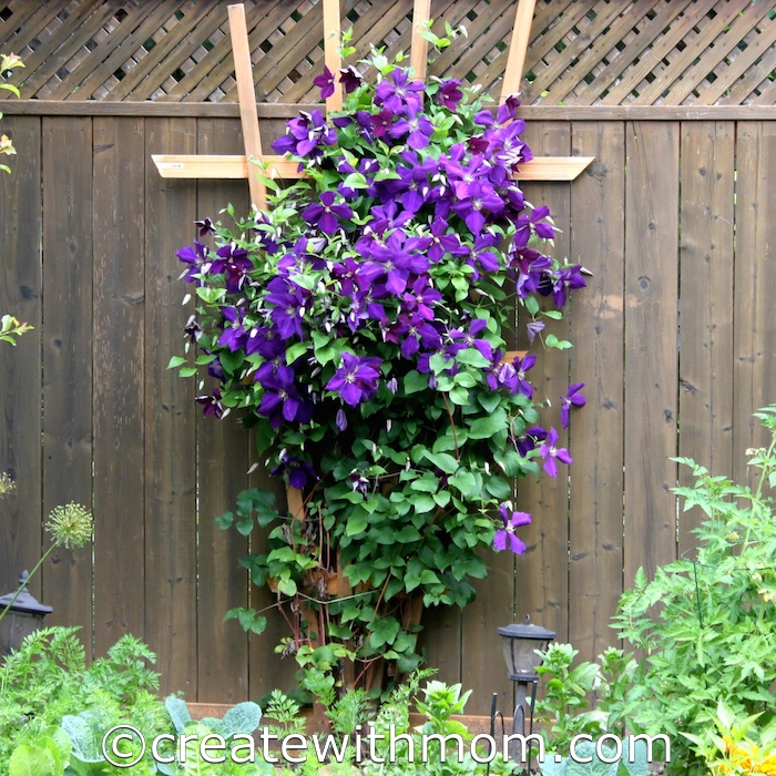Clematis Trellis Ideas Part - 33: In Spring, We Made A V-shaped Trellis For Our Clematis. It Is Cheaper To  Make A Trellis With Only A Few Materials Compared To Buying One.