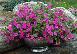цветы-в-контейнерах