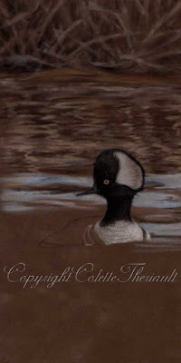Progression of a bird painting; The Hooded Merganser by Canadian Wildlife Artist Colette Theriault
