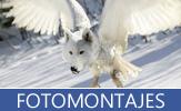 Colección de fotomontajes y fotomanipulaciones digitales realizadas con photoshop