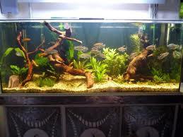 Set up new aquarium dwarf cichlids african cichlids fish for Koi fish tank setup