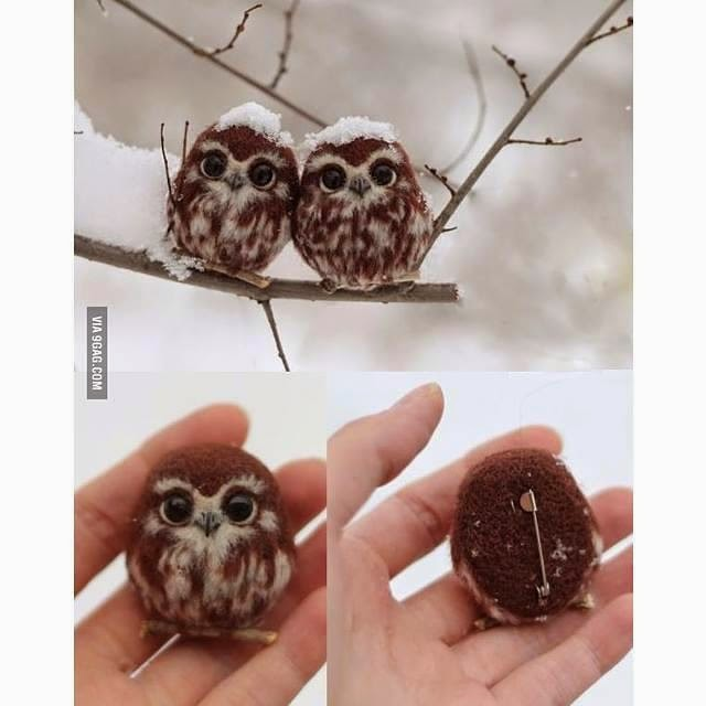 Baby Owls Winter
