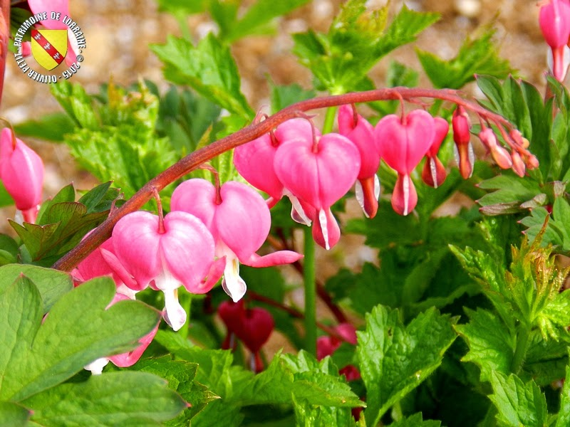 VILLERS-LES-NANCY (54) : Le jardin botanique du Montet-Coeur de Marie