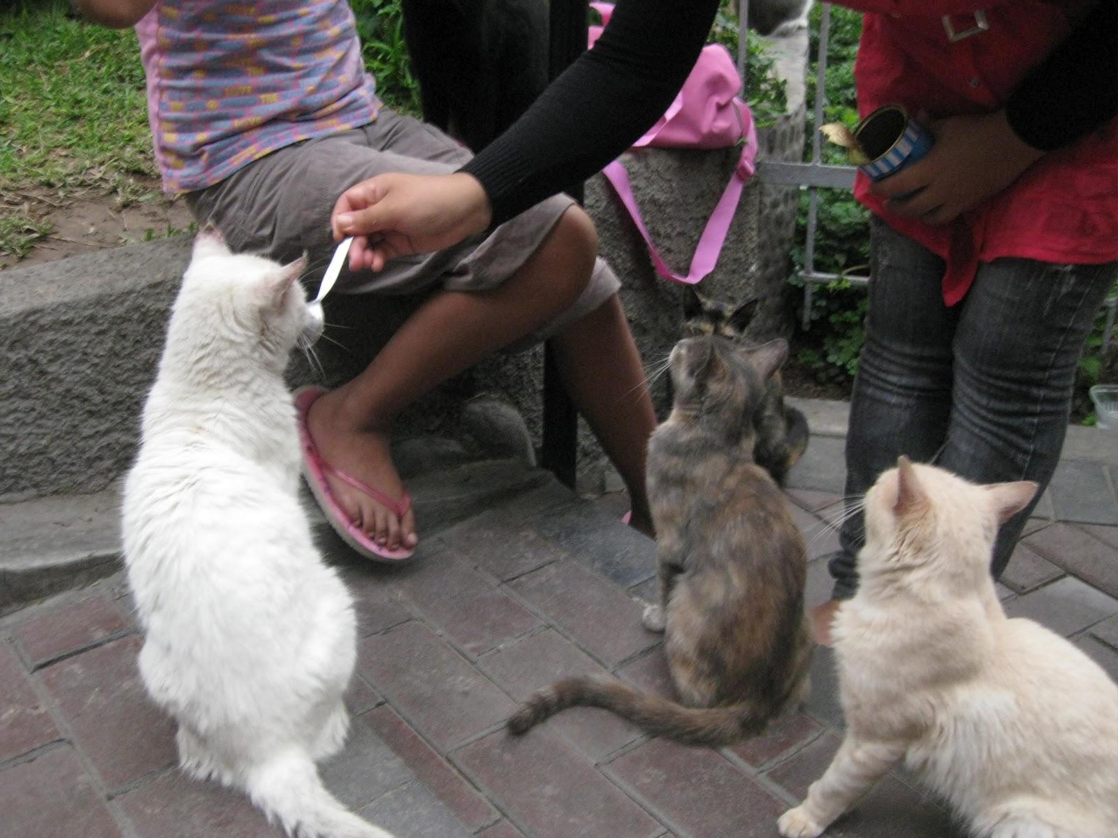 El jard n de isula los gatos del parque kenedy for Ahuyentar gatos del jardin
