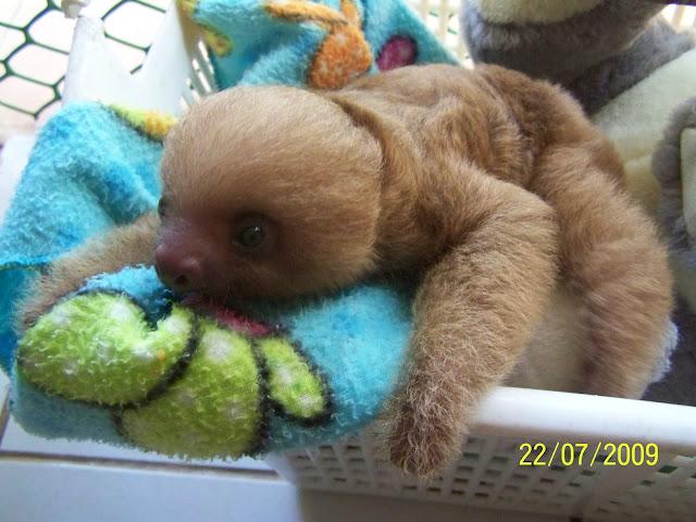 Costa Rica Rainforest Animals List