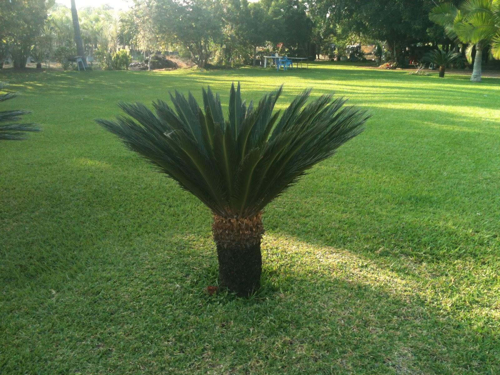 Cuentame plantas de ornato for Viveros de plantas de ornato