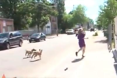 reportera atacada por perros
