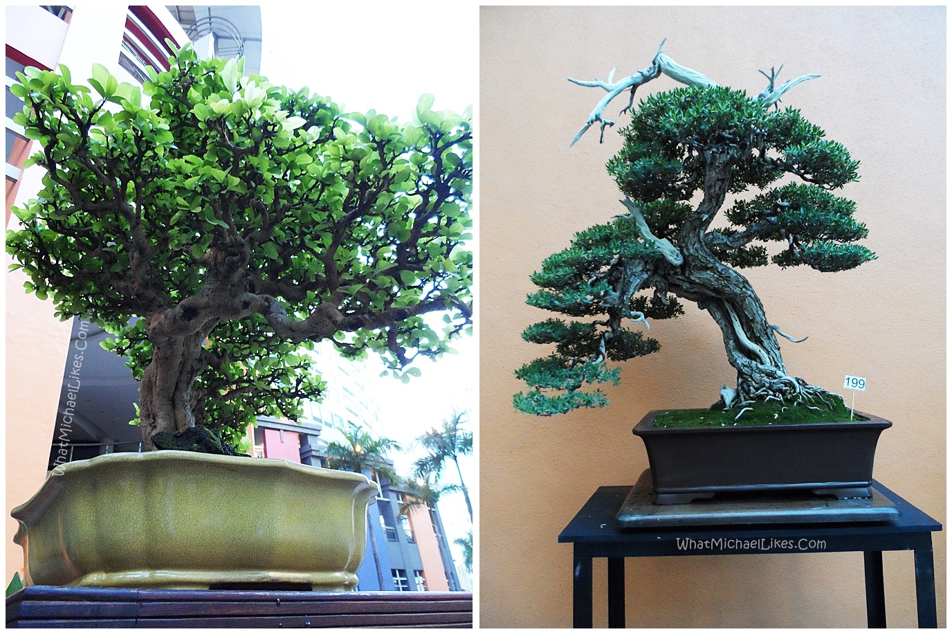 What Michael Likes Bonsai A Growing Piece Of Art