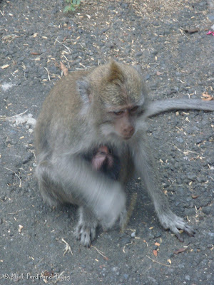 Ubud Monkey Forest Bali Photo 12