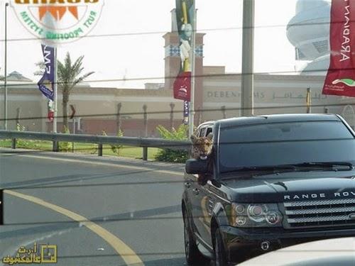 أغرب ما يمكن أن تشاهده 10 صور نادرة في دبي