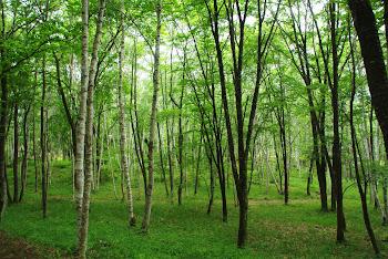 新緑が生える散歩道