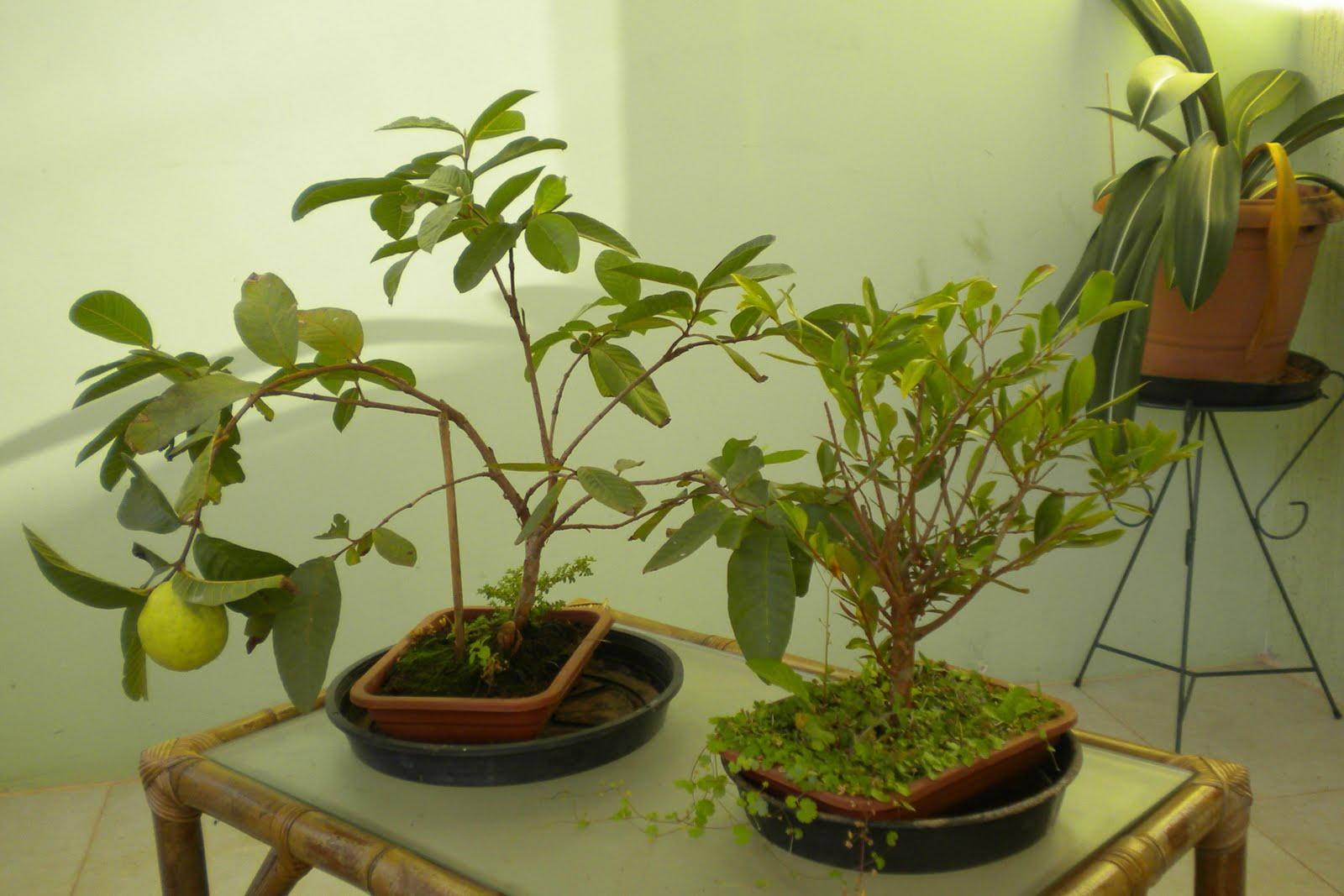 Blog Eu Curto Dicas Conheçam algumas plantas para decorar sua sala!