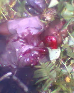 laba International Market Killing ; Robbers Kill Many In Broad Day Light