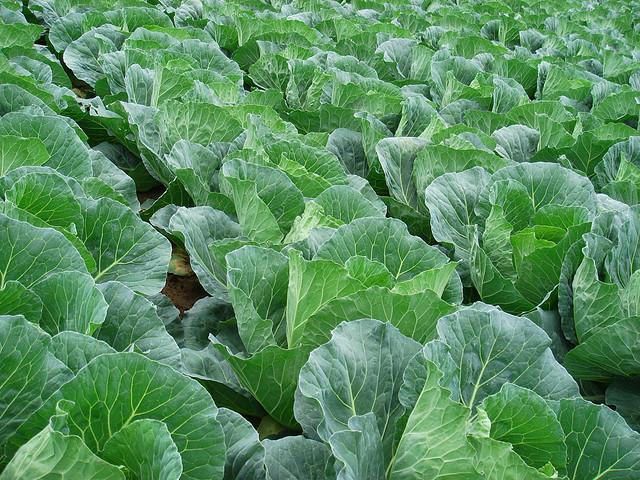 Peluang Usaha Agrobisnis di Lahan Sempit