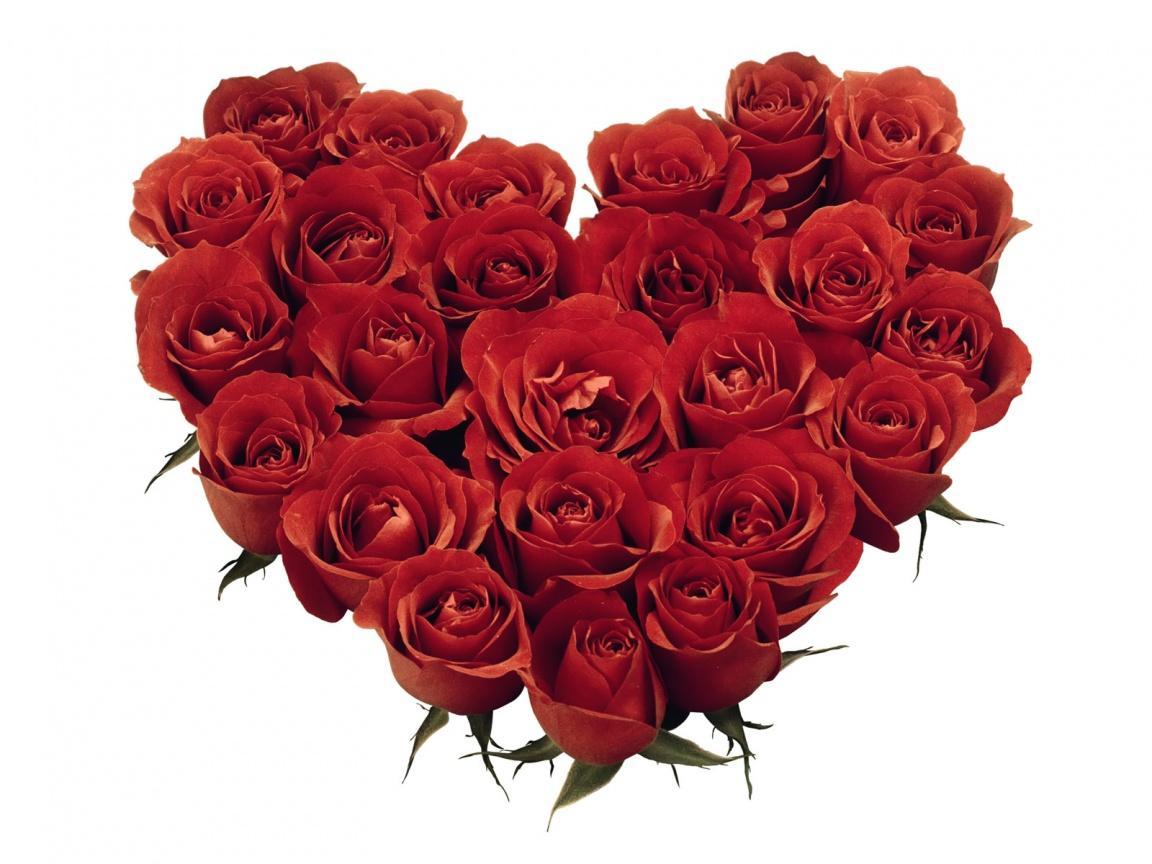 Foto bunga mawar versi 2012 dan ini merupakan bunga mawar terbaik