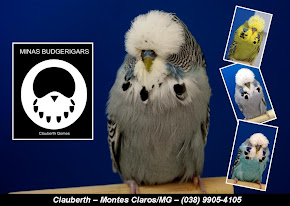 BLOG 01 - MINAS BUDGERIGAR