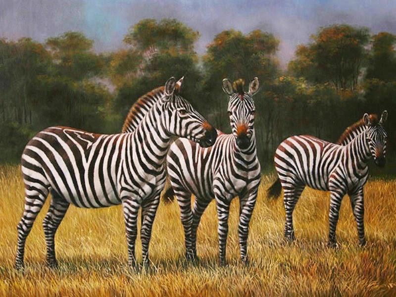 Pinturas cuadros lienzos al leo cuadros de animales leo - Cuadros de cebras ...