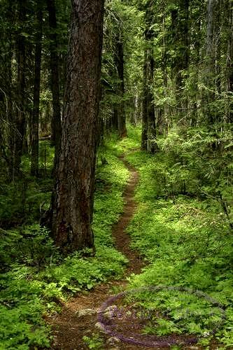 importance of forest Trees and forests recycle moisture in the atmosphere through the process of  transpiration to increase rainfall the importance of forest and.