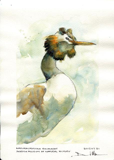 Watercolour sketch by David Meldrum, 20130331