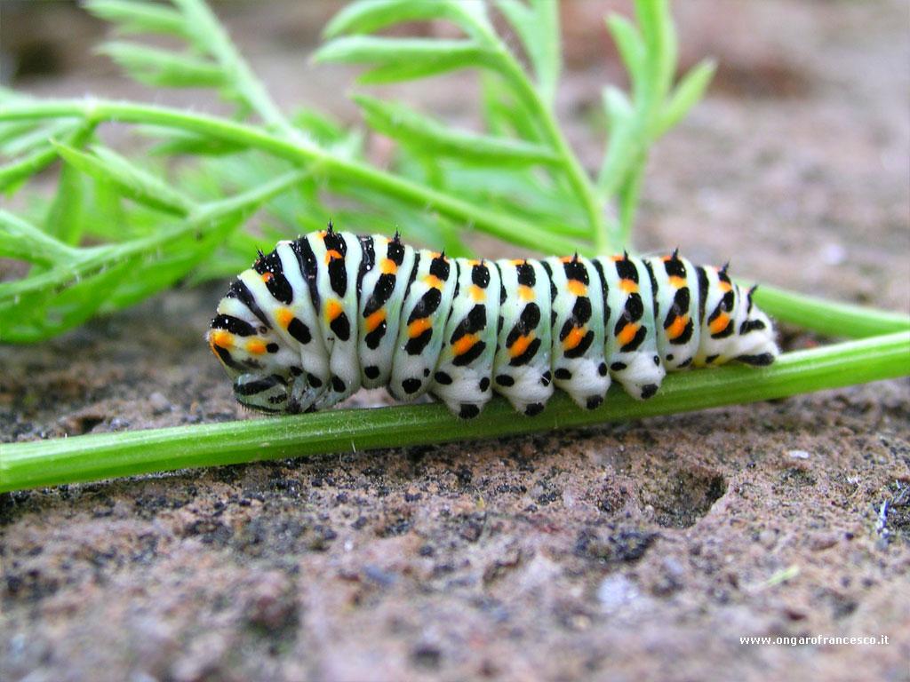 Gli animali di tutto il mondo - Colorazione dei bruchi ...