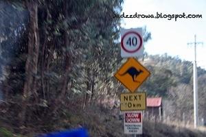 Uwaga kangury! Kangaroo sign!