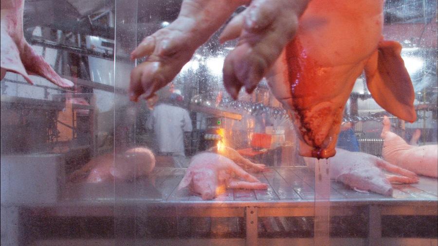 """Los seres """"humanos"""" matan y tragan a tres millones quinientos mil cerdos (3.500.000) cada... día."""