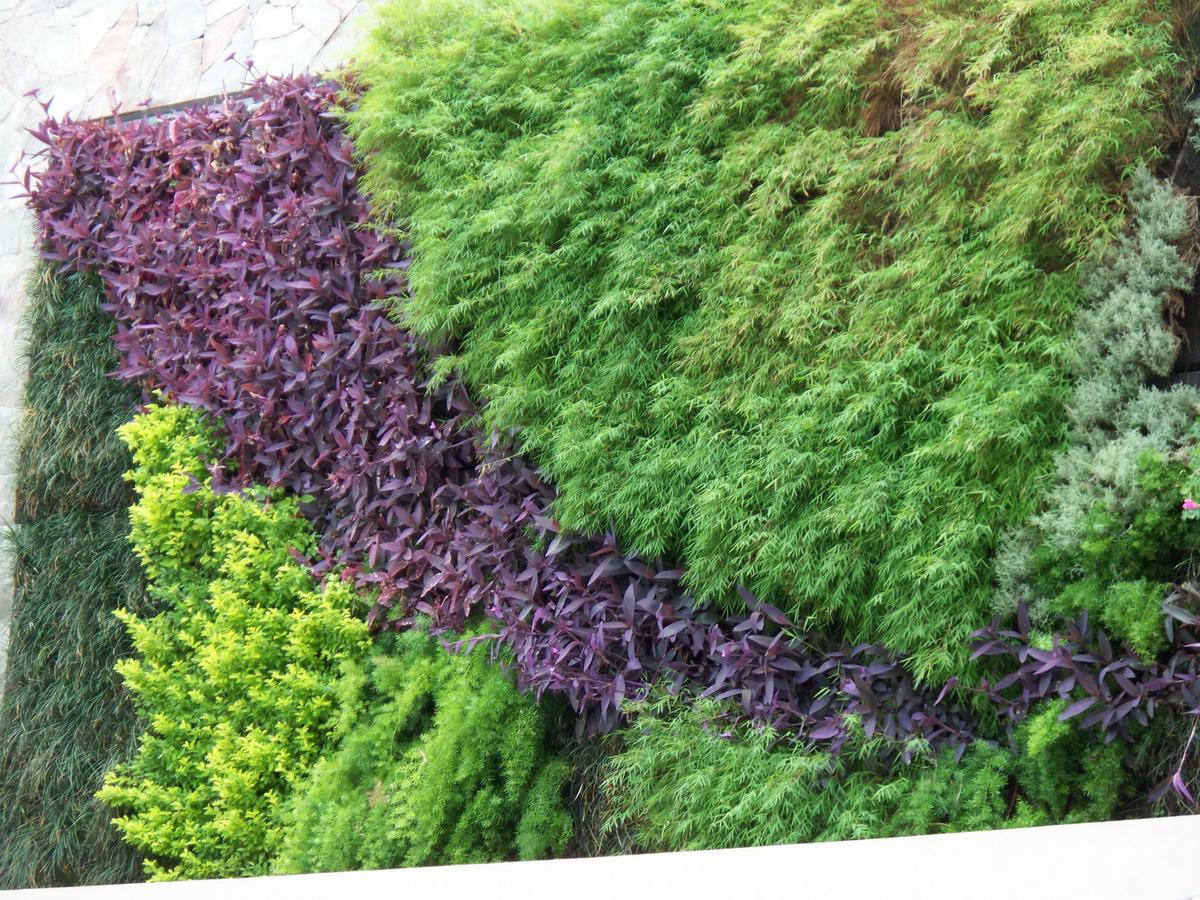 Jardines verticales monterrey fotos de la plata en oto o for Riego de jardines verticales