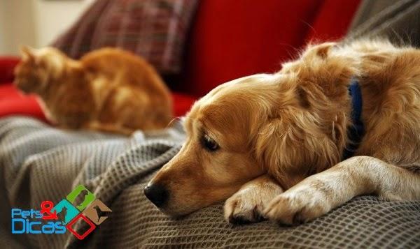 Dipilidiose em cães e gatos