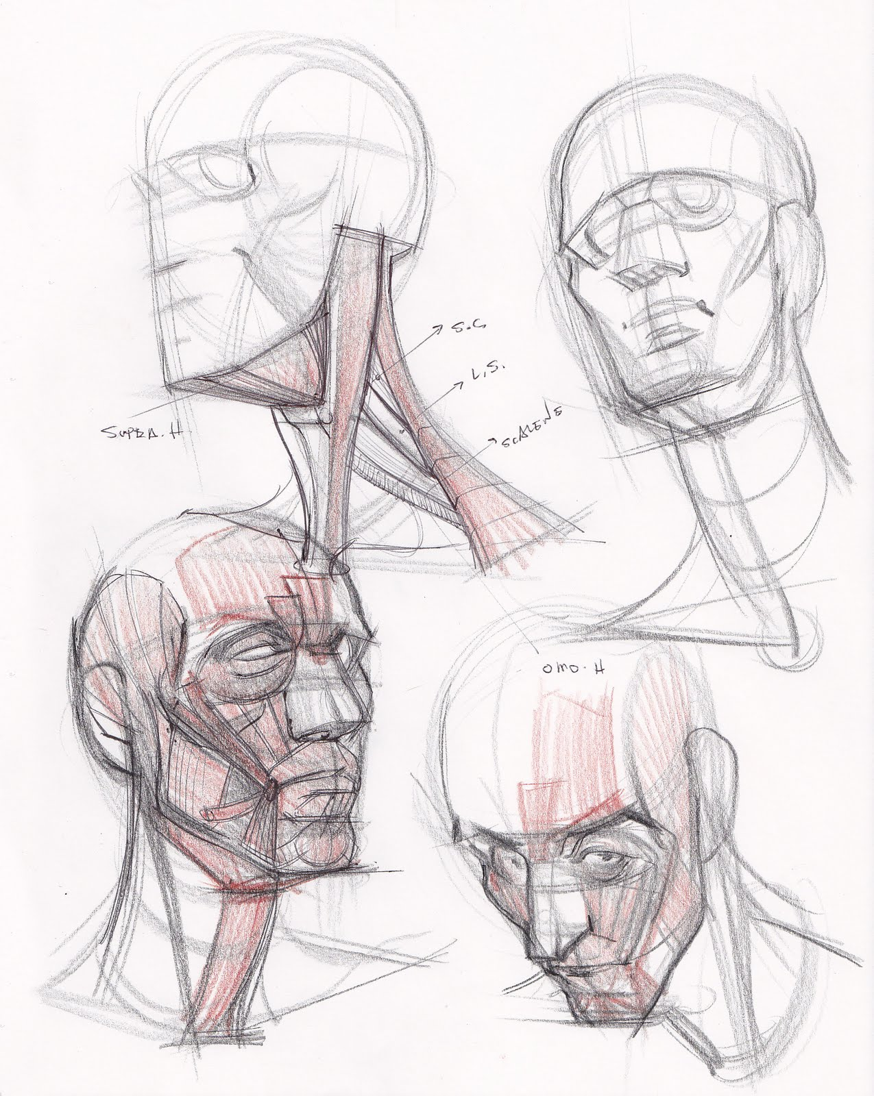 figuredrawing.info news: Head, Neck, and Anatomy