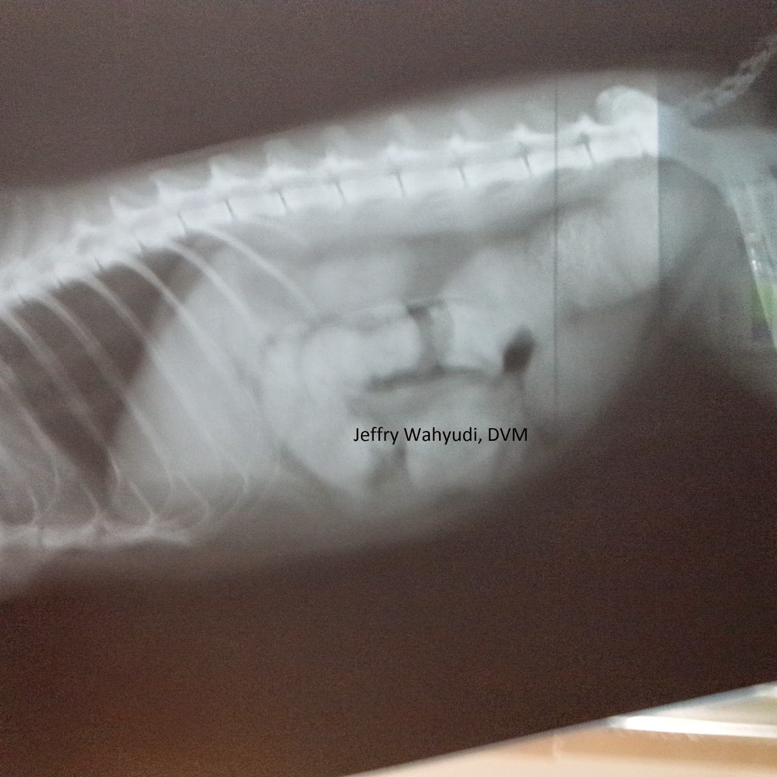 PAWS &CLAWS VET CLINIC: Megacolon in cats